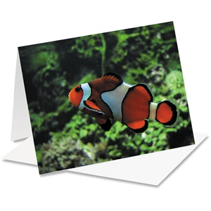 Clown Fish Notecards