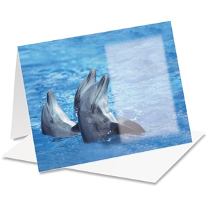 Dolphins Notecards