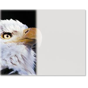 Eagle Photo Casual Certificates