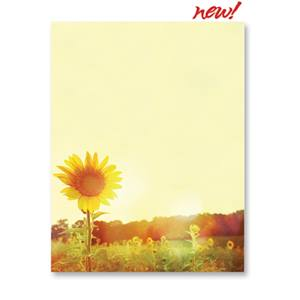 Chromatic Sunflower Border Paper