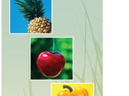 Perennial Greens 3-Panel Brochures