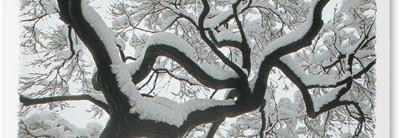 Majestic Tree Greeting Cards