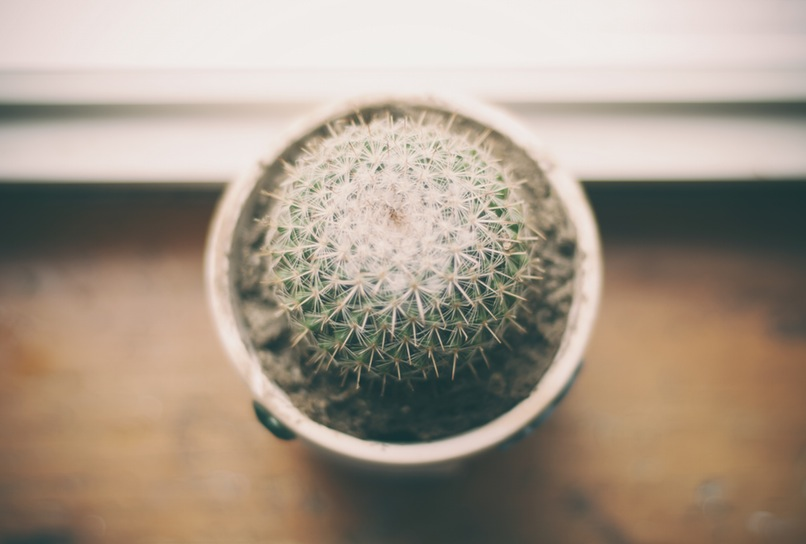Cactus in Office