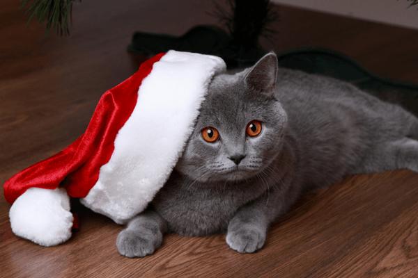 pet christmas card ideas